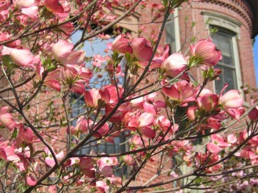 Spring, Boston, trees, recipe, shrimp