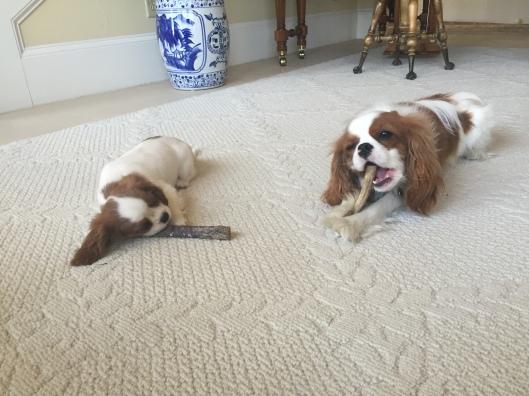Gratuitous photo of Fergus with his little sister, Sophie
