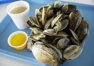 steamed clams, steamers, beer,, Paragon Park, Nantasket Beach, 4th of July, S. A. Young