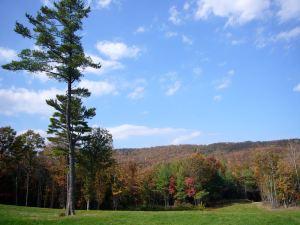 meadow-fall