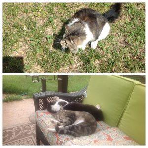 Miss Boo (top) Jr & Stumpy (bottom)