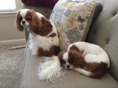 fergus-and-sophie-1