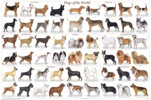 dogs, pets, Monday, blogging, S.A. Young