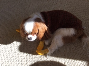 Gratuitous pic of Fergus (in light and shadow) irritated at his new boots