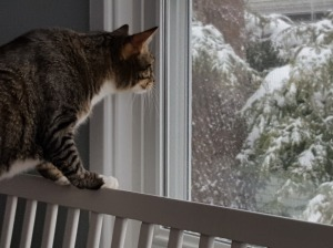 Alec, cat, snow, birthday, Orson, Niko, Monday, S. A. Young