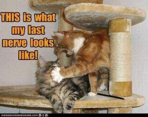 cats, meme, last nerve, Monday, blogging, S.A.Young